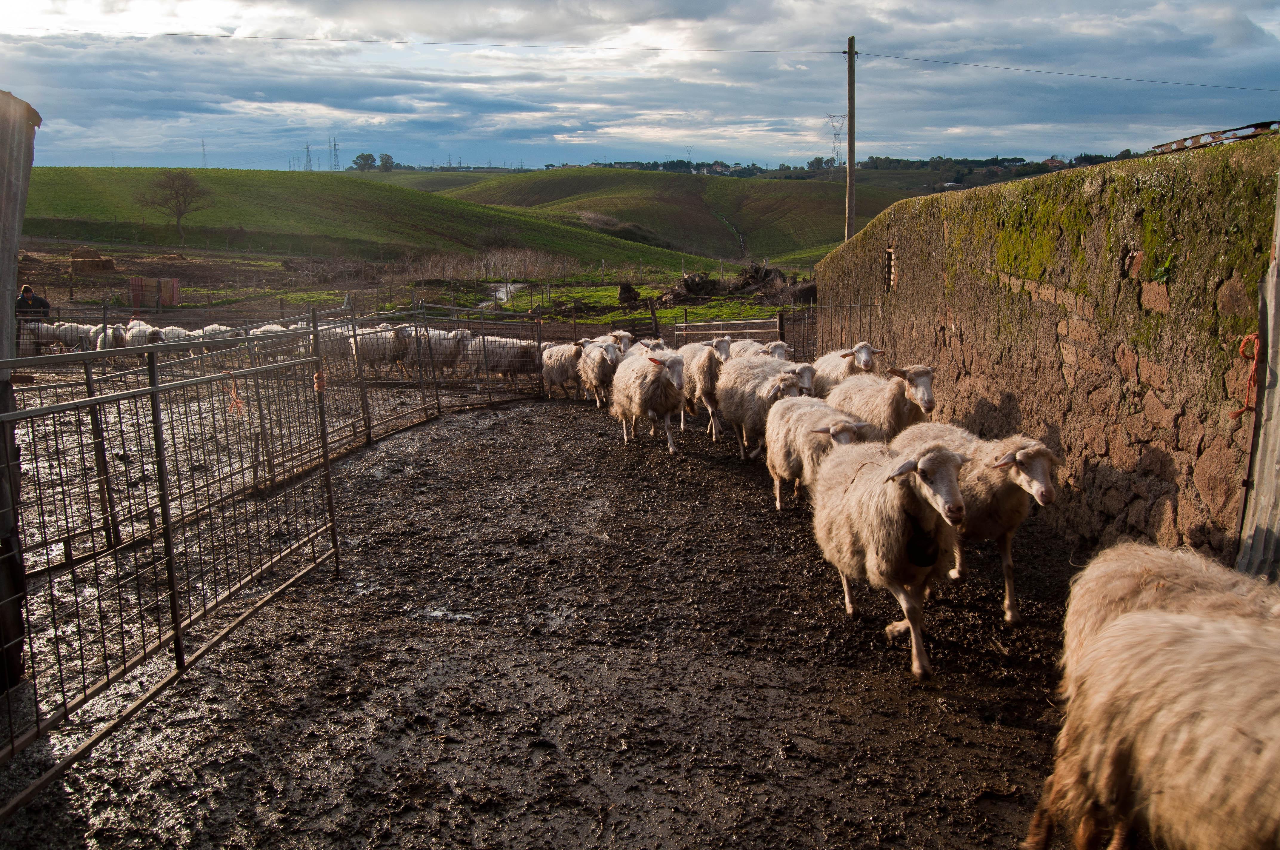 Agro romano concorso fotografico i paesaggi del cibo for Cibo romano