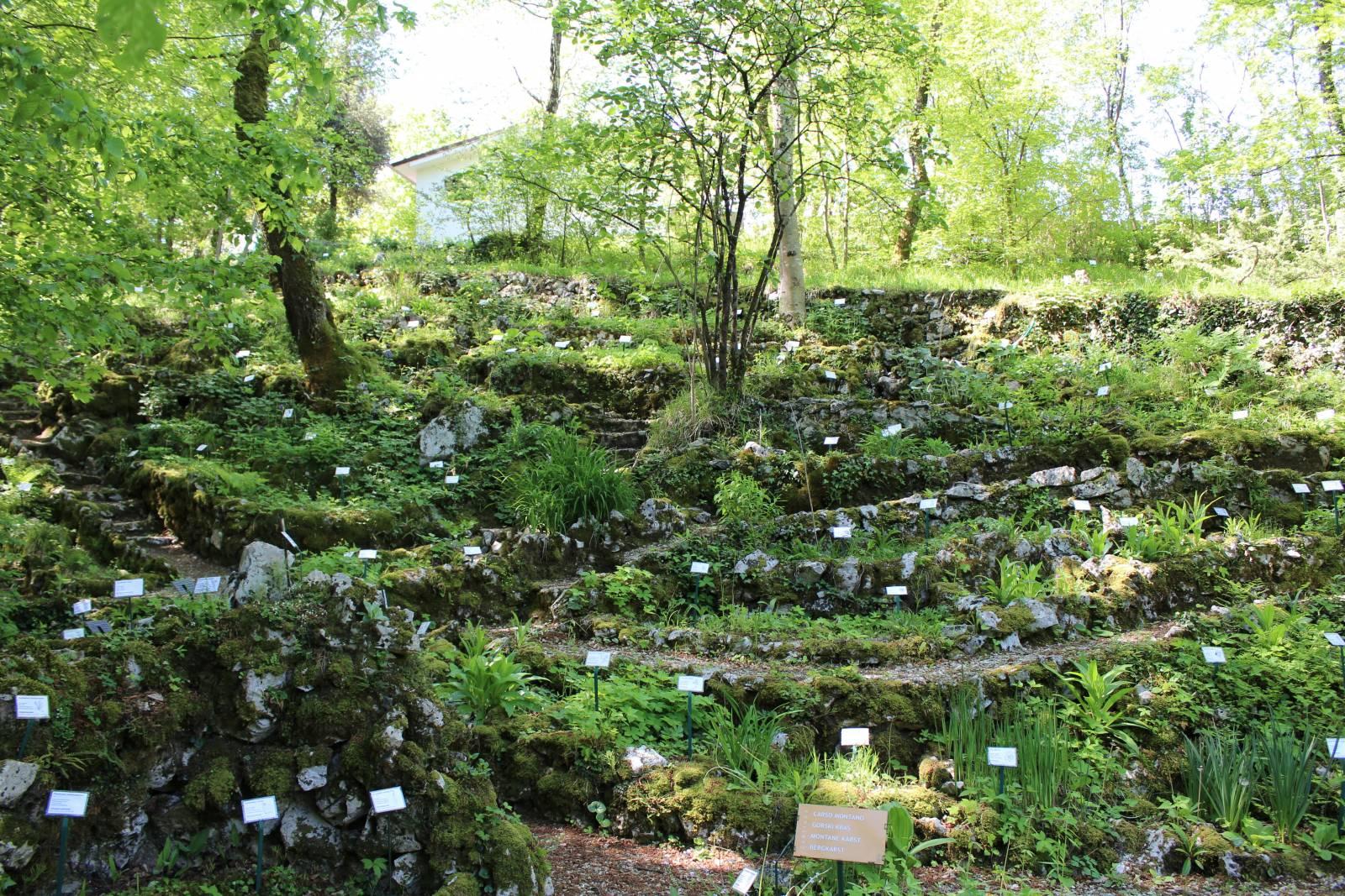 Dieci giardini botanici sulle alpi for Organizzare il giardino di casa