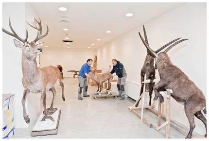 Trento: aperto il nuovo Museo delle Scienze