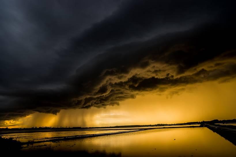 La tempesta perfetta sulle risaie.