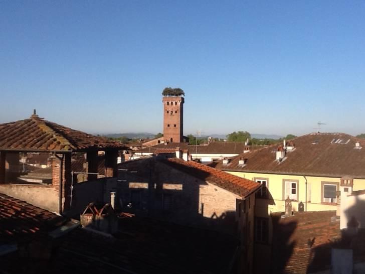 Lucca Torre Guinigi