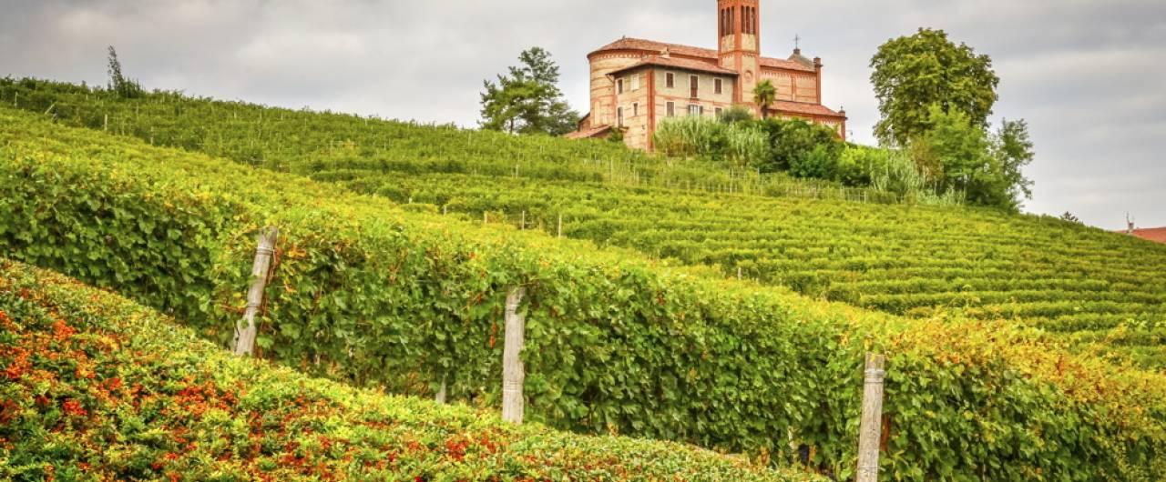 Quali sono i migliori vini del piemonte - Quali sono i migliori sanitari bagno ...