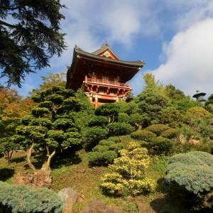 Arrivano dal Giappone i maestri per salvare i giardini del tè