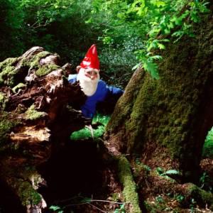 Un weekend in cerca di gnomi nelle Foreste Casentinesi
