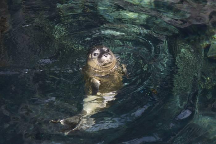 Nuovi cuccioli all 39 acquario di genova e allo zoom di for Acquario a colonna