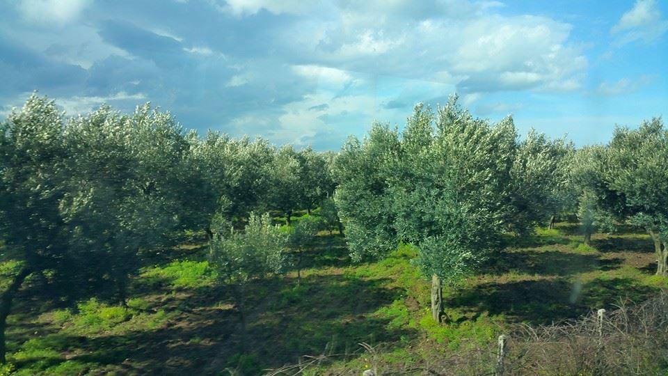 Colori di Calabria: il verde degli uliveti e l'azzurro del ...