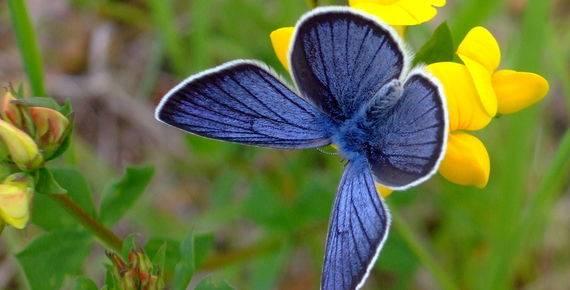 Un'autostrada per le farfalle
