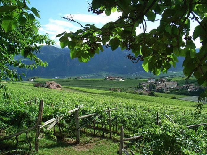 Weinbaugebiet - Eppan an der Weinstraße