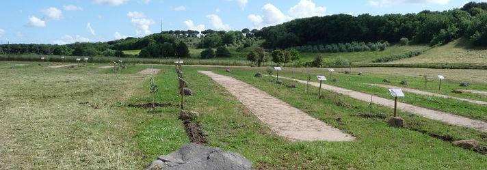 Nasce sull'Appia antica il Giardino degli alberi monumentali