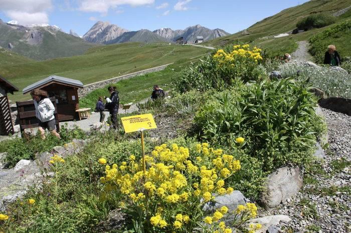 Il giardino alpino Chanousia