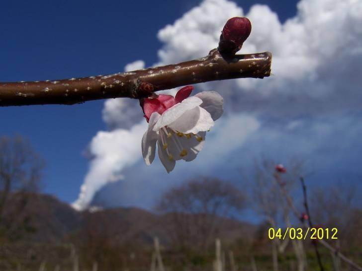 Etna in fiore