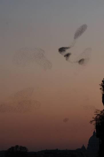 nuvole di storni