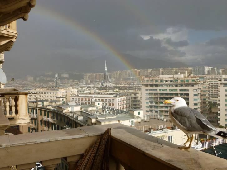 genova,il gabbiano e l'arcobaleno