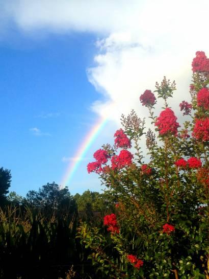 Se dietro ai fiori un arcobaleno..