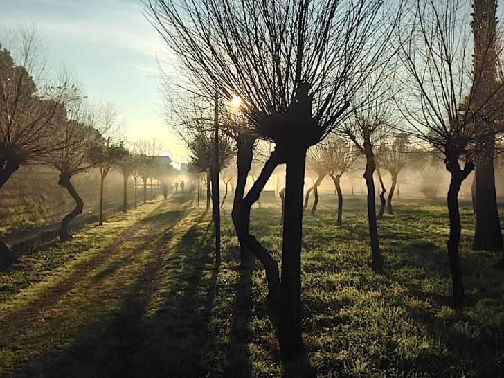 Sole tra i rami e la nebbia di Scampia