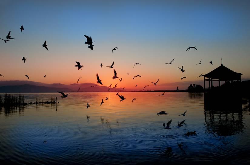 Il lago di Puccini
