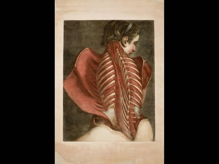 Resultado de imagen de sublimi anatomie