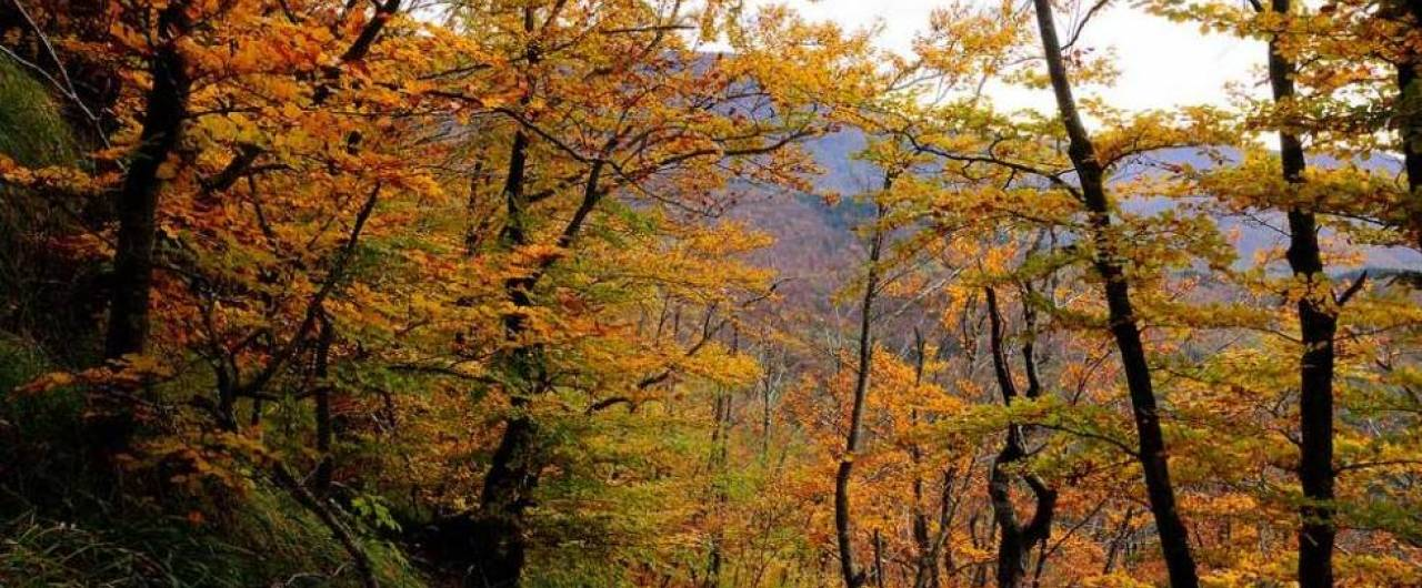 Dove vedere il foliage più spettacolare in Italia   Touring Club