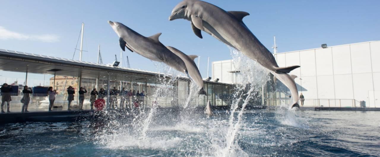 Acquario di Genova: le novità di febbraio e marzo