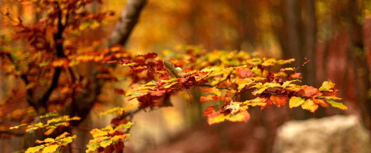 Passeggiate d'autunno nei parchi e nelle riserve degli Appennini