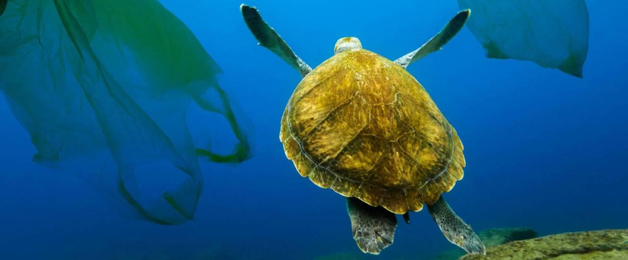 Una petizione mondiale del Wwf per un trattato internazionale contro i rifiuti di plastica