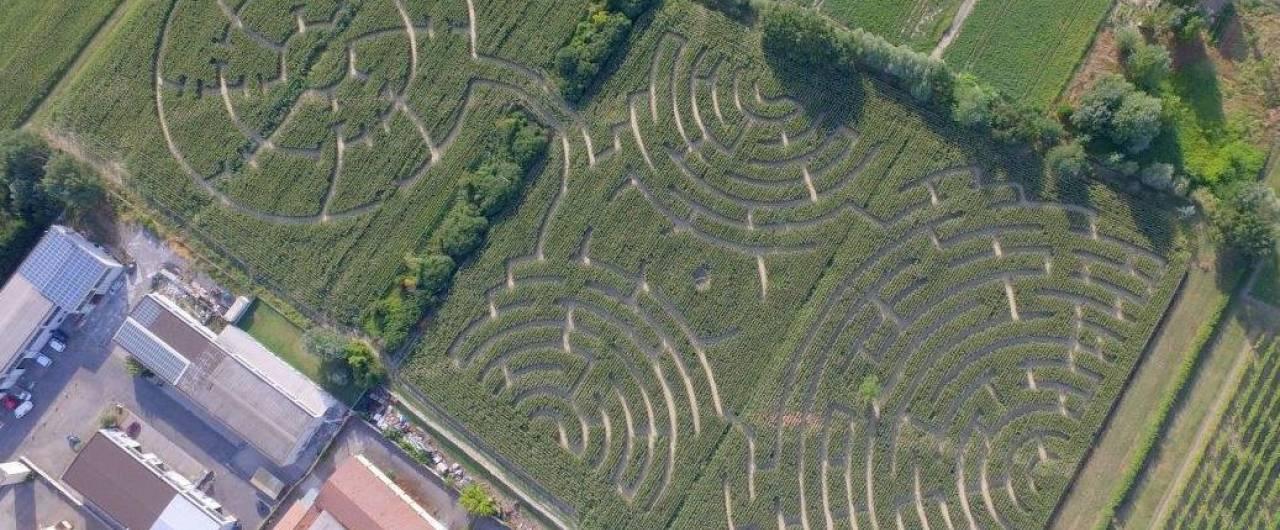 Anche questa estate in Romagna ci sarà il labirinto verde più grande del mondo