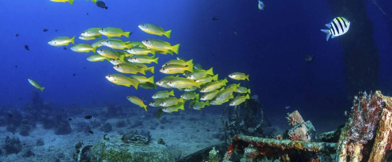 Il Mar Rosso è pericoloso?