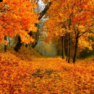 Dove vedere il foliage più spettacolare in Italia