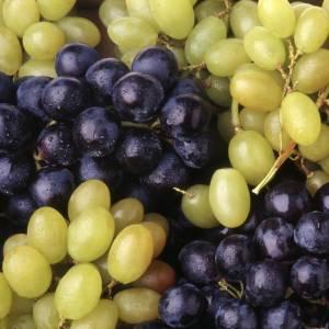 Quali sono i migliori vini friulani?