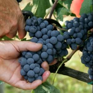 Sabato 21 aprile la Giornata nazionale del vino e dell'olio