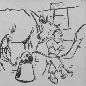 Codogno, capitale della panna: un articolo del 1949, corredato da disegni d'autore