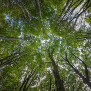 Online due nuovi siti per avvicinarci all'incanto degli alberi