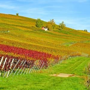 Il Punto Touring di Roma promuove cinque incontri alla scoperta dell'Italia del vino