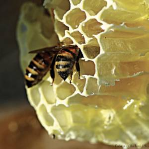 A Roma inaugurata una mostra sul mondo delle api e la loro importanza per l'uomo