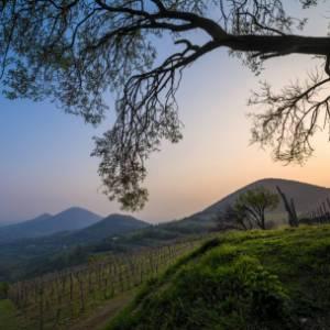 Il Giro del Touring 2020, tappa 13. Sui Colli Euganei, tra i ricordi di Petrarca e una nuova vittoria di Ulissi