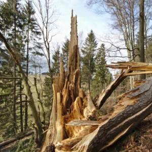 Che cosa ci insegna la tempesta di ottobre sulle Dolomiti?