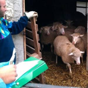 """La grande sfida dei pastori della Majella, custodi della """"Montagna Madre"""""""