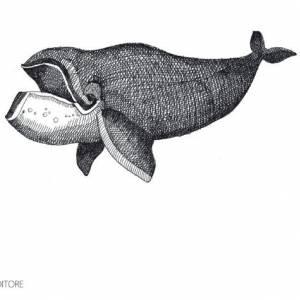 Ascoltare Moby Dick al Punto Touring di Milano