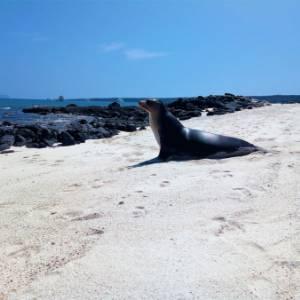 Galapagos in famiglia: cosa vedere, come risparmiare