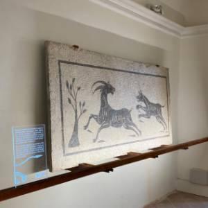 A Saltara, nelle Marche, una nuova sala per i mosaici romani