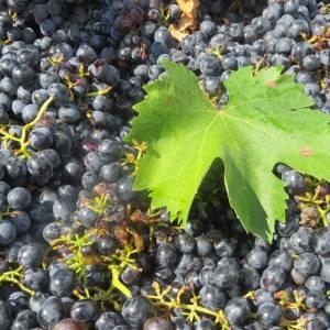 Quali sono i migliori vini di Puglia?