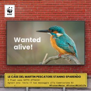 Lontre e martin pescatori sono in pericolo, salviamo insieme gli animali dei fiumi!