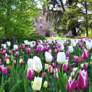 Piemonte, migliaia di tulipani in fiore al Castello di Pralormo