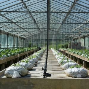 I consoli Tci della Toscana premiano lo sviluppo agricolo sostenibile