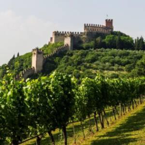 La cantina di Soave, in Veneto: un'eccellenza green a sostegno del territorio