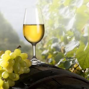 Quali sono i migliori vini della Campania?