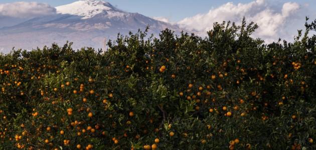 Etna, un vulcano di sapori di Sicilia da scoprire on the road