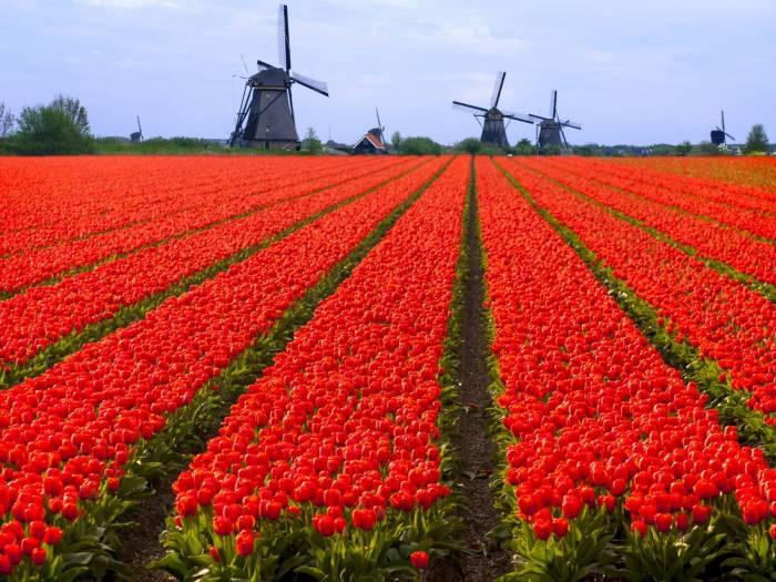 siti di incontri gratuiti in Olanda