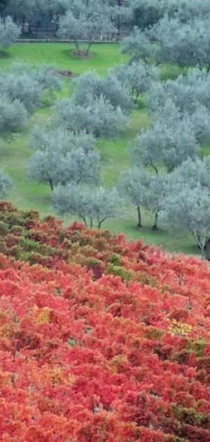 Che cosa fare il weekend del 14-15 settembre in tutta Italia
