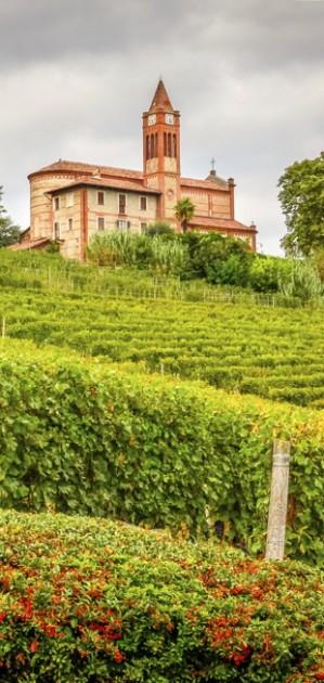 Quali sono i migliori vini del Piemonte?